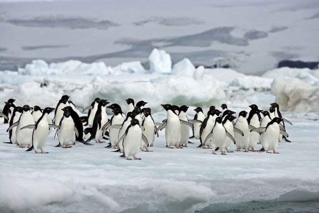 Antarctica general information | Southamericaplanet