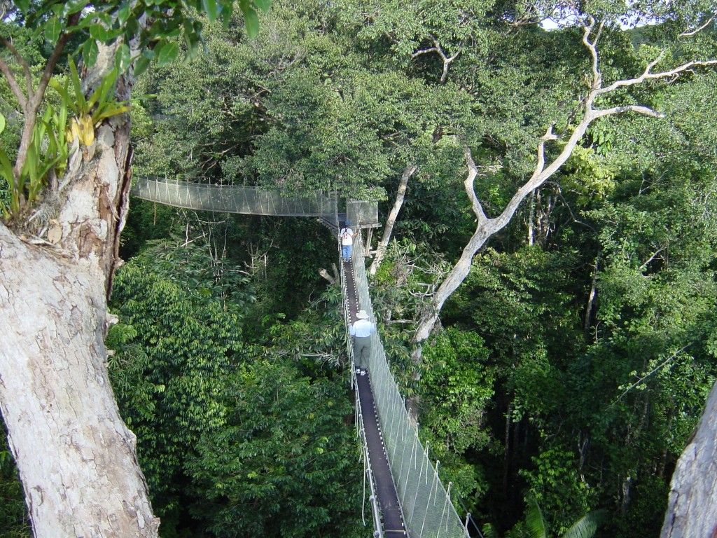 Explorama or Ceiba jungle lodge 4 days Iquitos canopy walk north Peru jungle amazone river | Southamericaplanet & Explorama or Ceiba jungle lodge 4 days Iquitos canopy walk ...