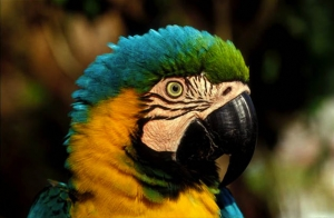 Puerto maldonado expedition with Macaw Clay Lick and Sandoval Lake south Peru