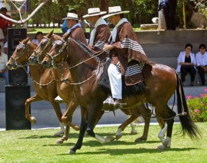 caballo-de-paso-peruano