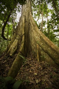 flora selva